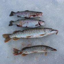 Платная рыбалка Карпов пруд