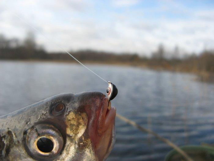 прогноз рыбалки на неделю в рязанской области