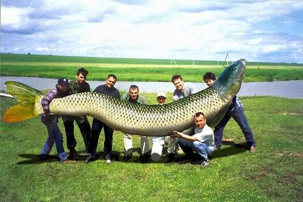 магазин все для рыбалке кумертау