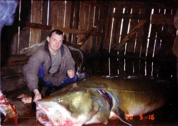 Фото 2000 г. Такие рыбки ловятся в Амуре. Калуга.