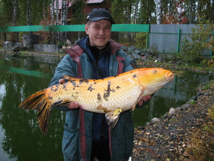 рыболовный магазин золотая рыбка на базовой
