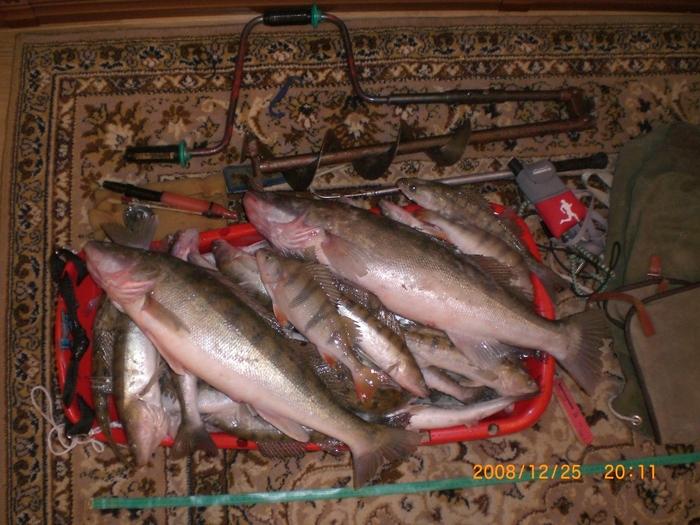 сегодня рыбалка удачная