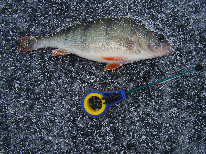 рыбалка дедушкина