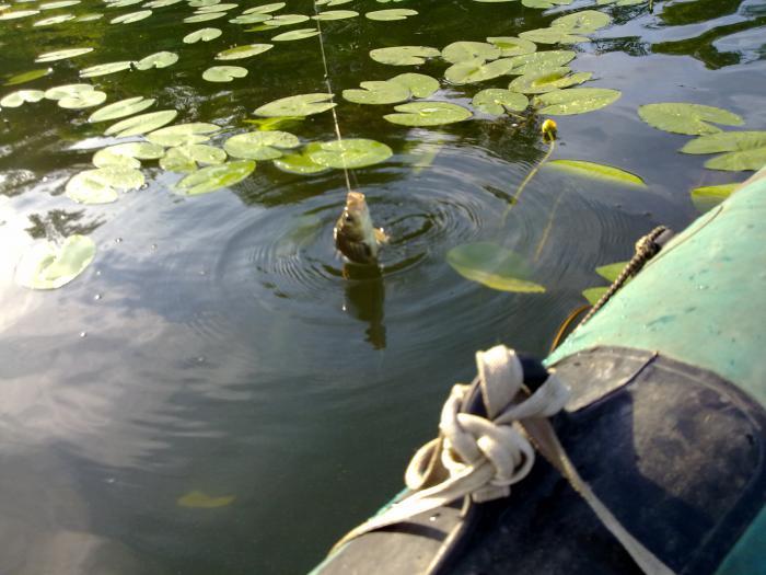 люберецкие рыбаки