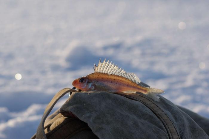 Счастье рыбака