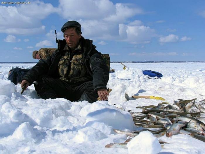 рыбалка зубаря на сахалине