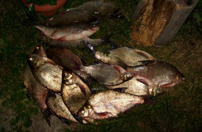 прогноз рыбалки в новомосковске тульской
