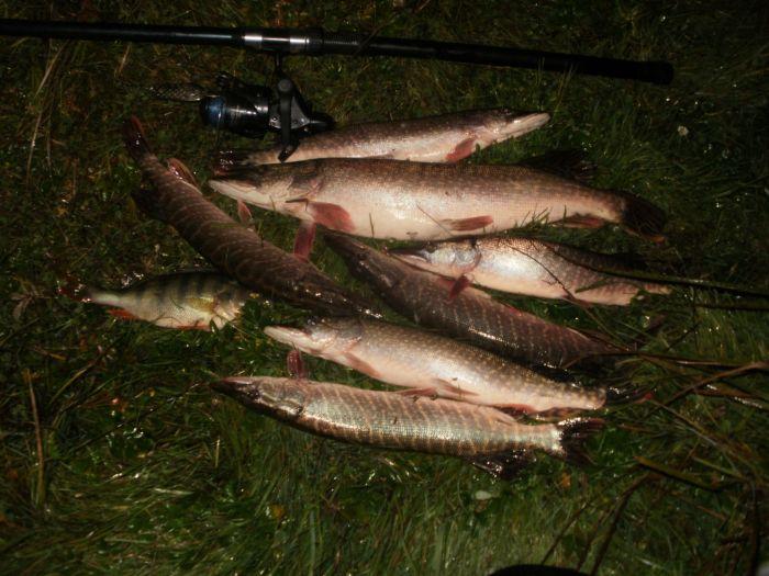 погода для рыбалки в карасуке