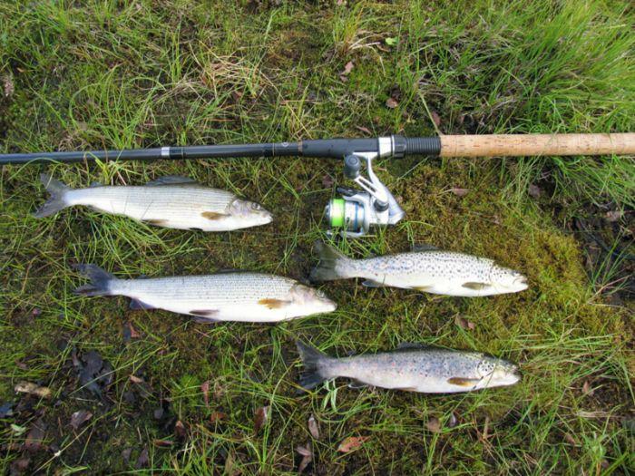 ловля речной форели на спиннинг