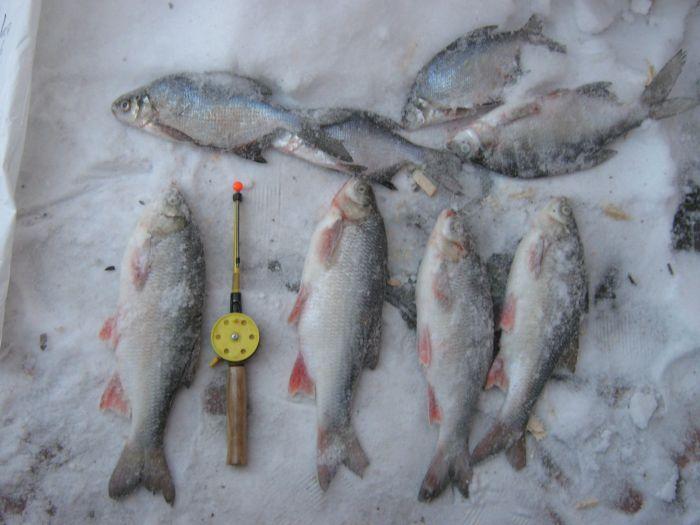 прогноз клева рыбы в ногинске на неделю