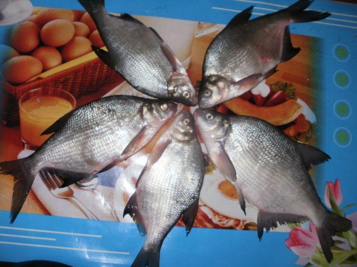 рыбалка в коченевском районе новосибирской области
