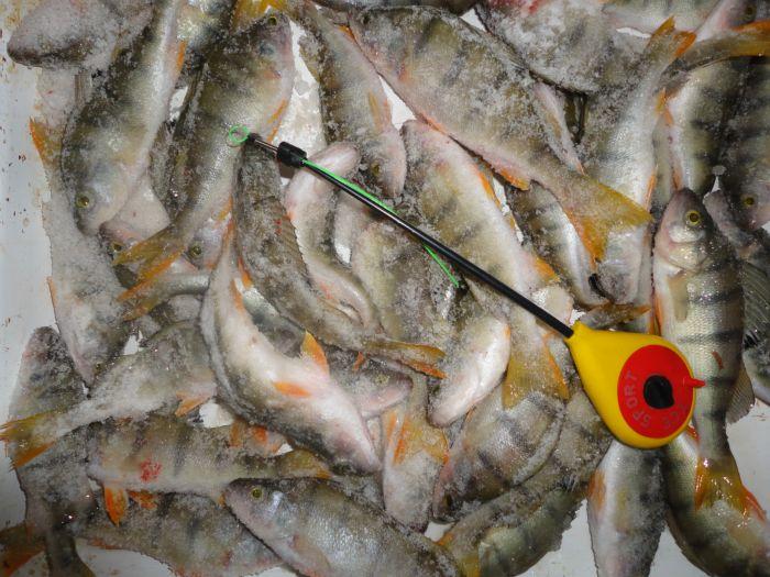 запреты на ловлю рыбы липецкой области