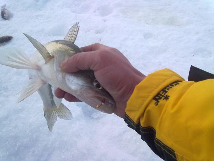 черви для рыбалки в стерлитамаке
