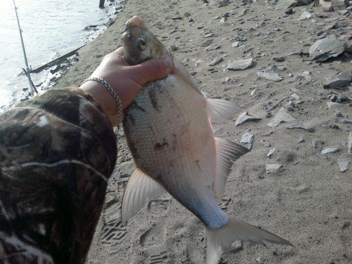 перловка на рыбалку на карася видео