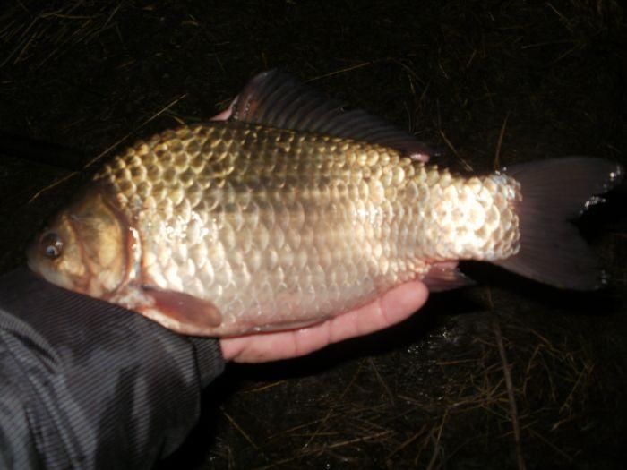 рыбалка в новосибирске карасук
