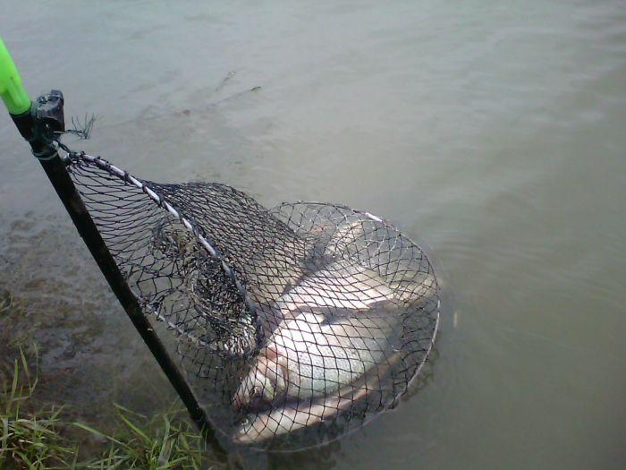 Отличная рыбалка на оби .Фидер :: Сайт ...: fishingsib.ru/tidings/view/57238