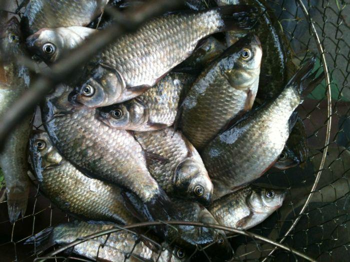 малиновский рыбалка