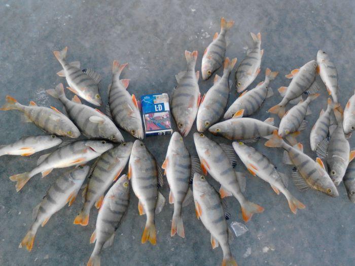 рыбалка на благодатке