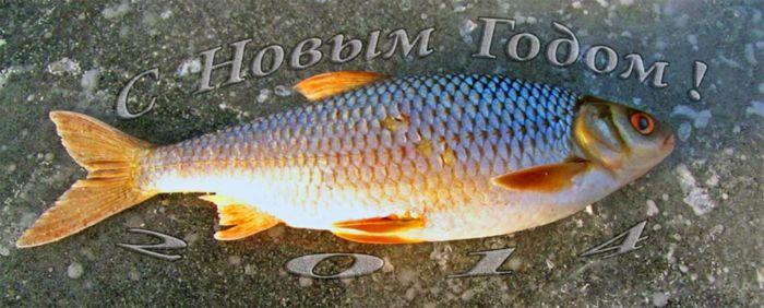 рыбалка в шарыпово летом