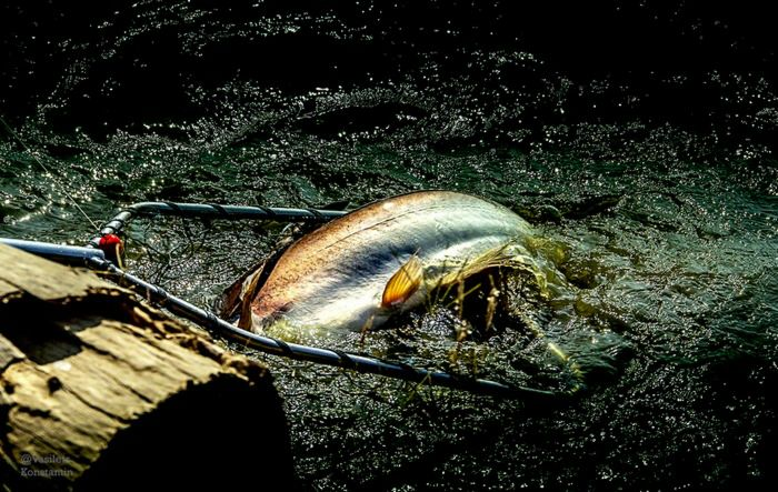 нетронутая природа рыбалка