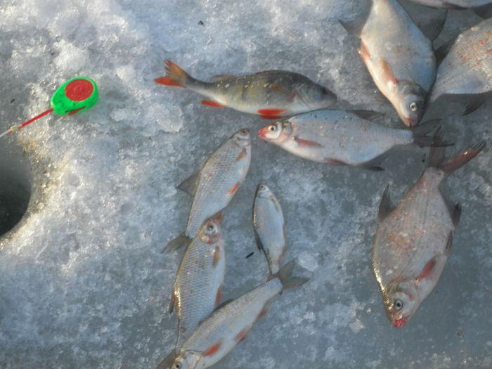рыбалка на котловане видео