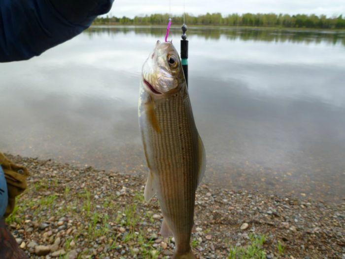 фильмы о рыбалке ленок и хариуса