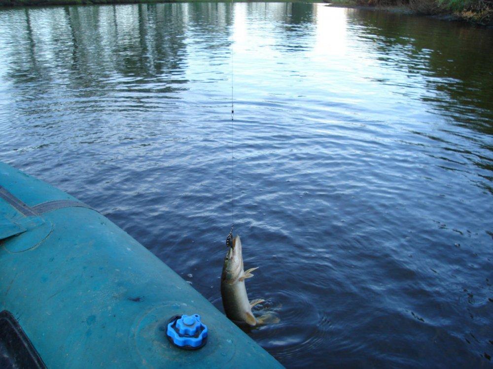 вести с водоемов сайт новосибирских рыбаков сузун