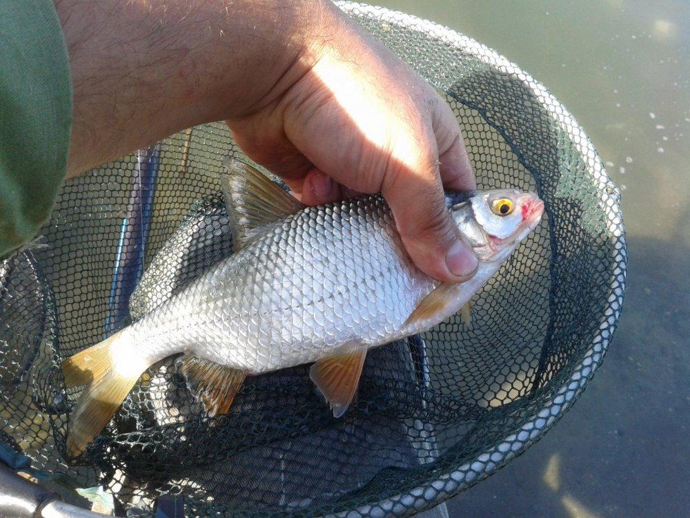 рыбалка на западных котлованах