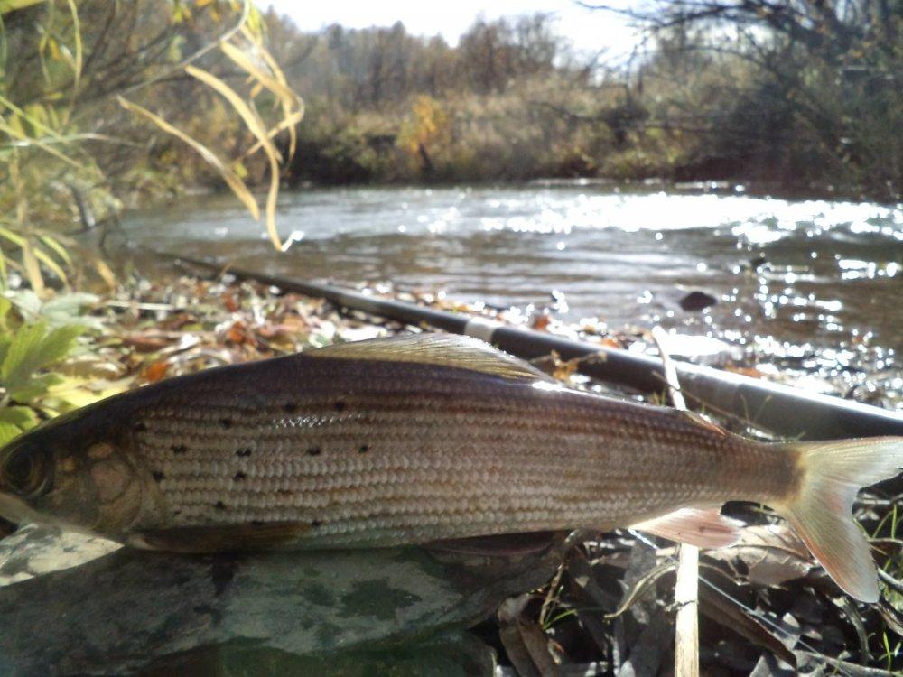 рыбалка на реке ирмень новосибирская область
