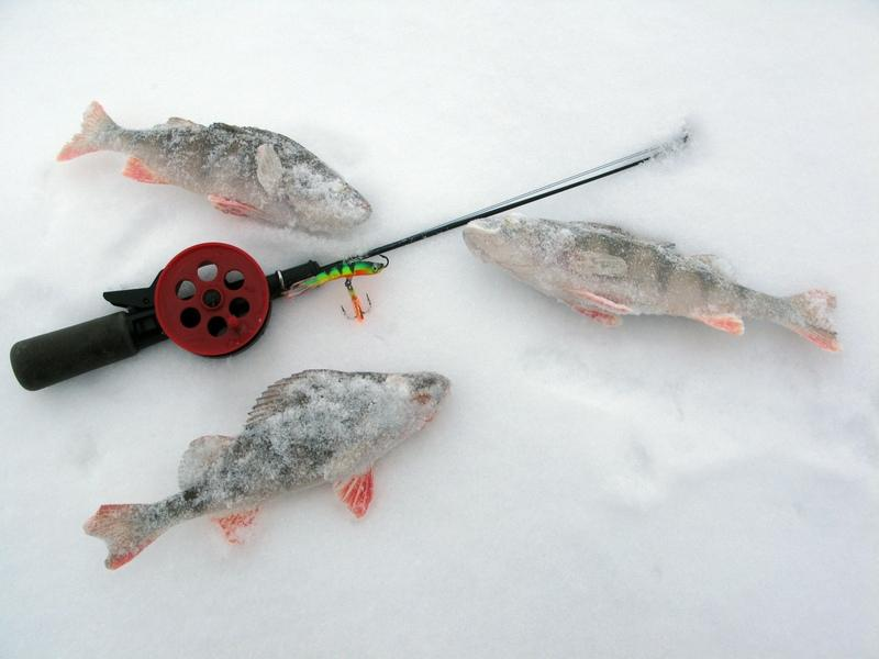 клев рыбы на неделю в сузуне