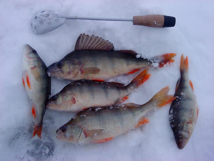 рыбалка в завьялово летняя на что клюет алтайский край
