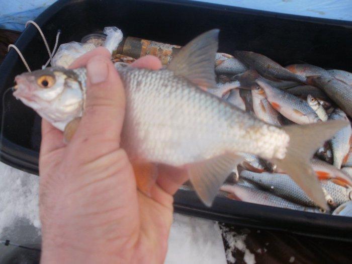 рыбалка с ночевкой в алтайском крае
