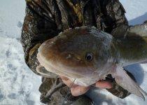 реликтовая рыба