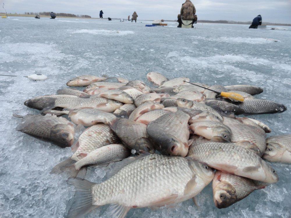 озера карасукского района новосибирской области рыбалка