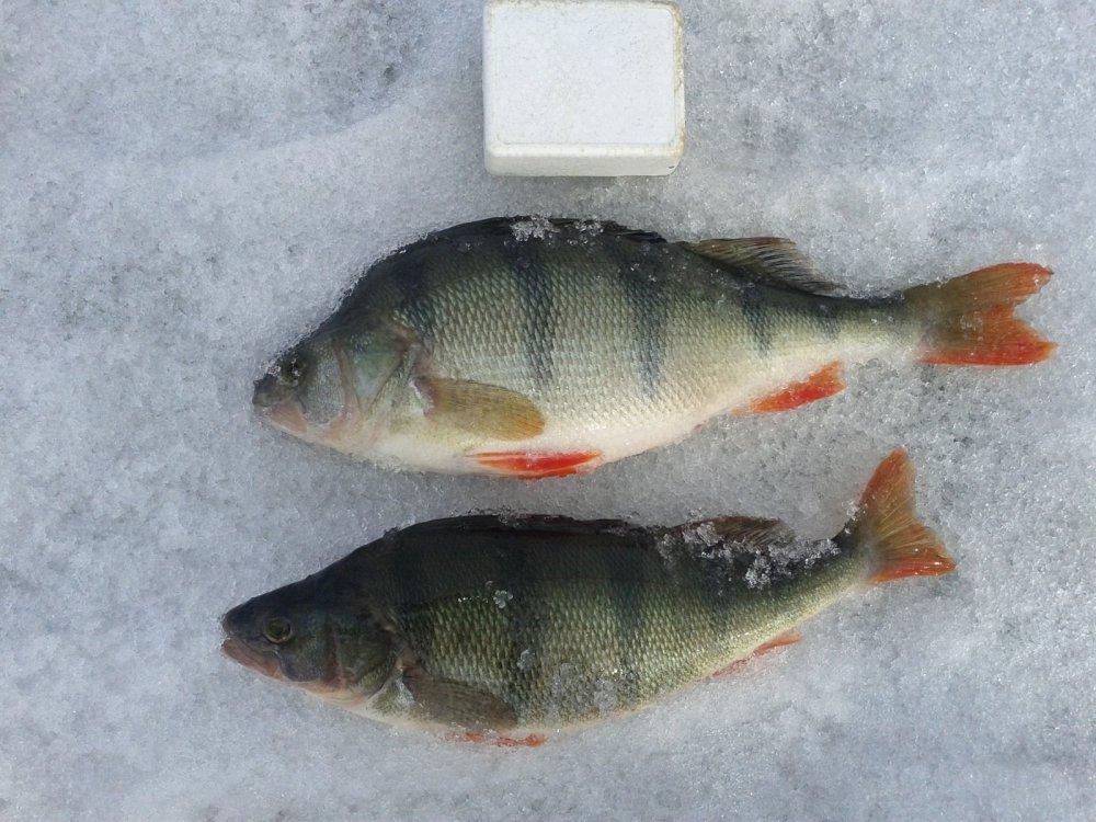 рыболовный прогноз в бердске