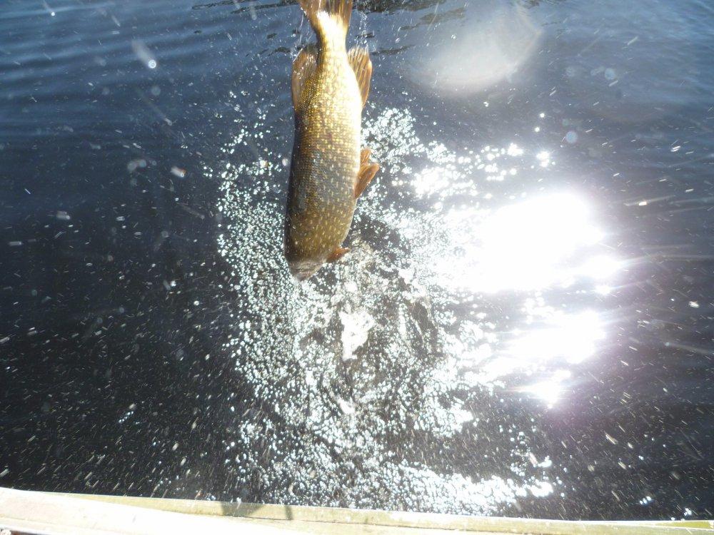 клев рыбы в нефтеюганске