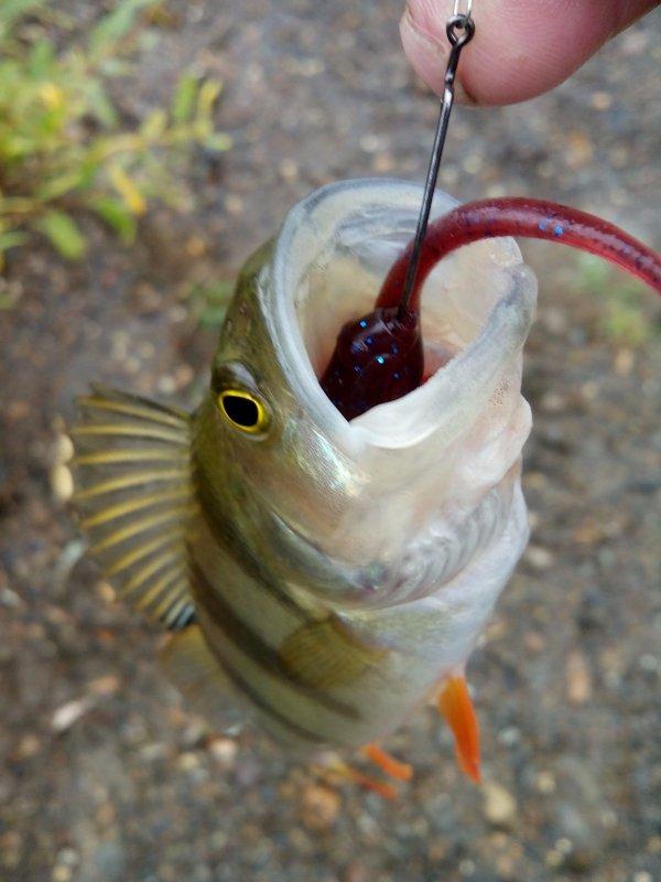 обрадованный и польщенный рыбаков
