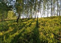 Рассвет.  июль 2015. о.п.38 км