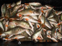 рыбалка на заячьем острове