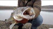 Красивейщие подводные убийцы!))