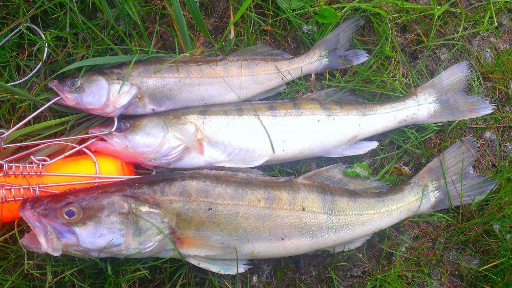 рыбалка в томской области на судака
