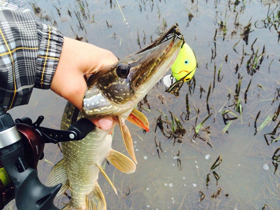 ловля щуки на мелководные воблеры видео