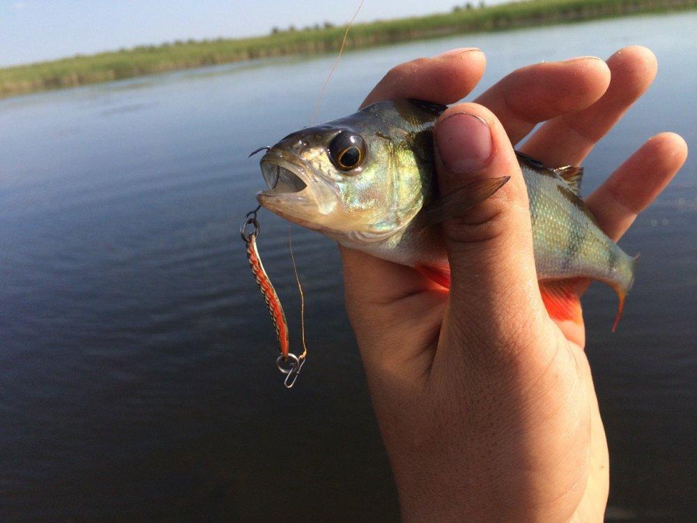 правила рыбной ловли на окуня