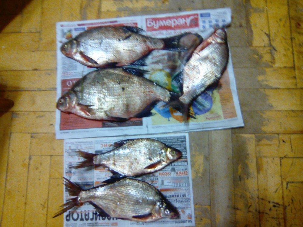 рыбхоз омск прогноз клева рыбы