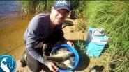Густера на фидер на реке Гауя | Рыбалка с Родионом