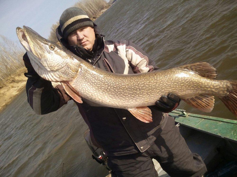 ловля щуки в озерах томской области
