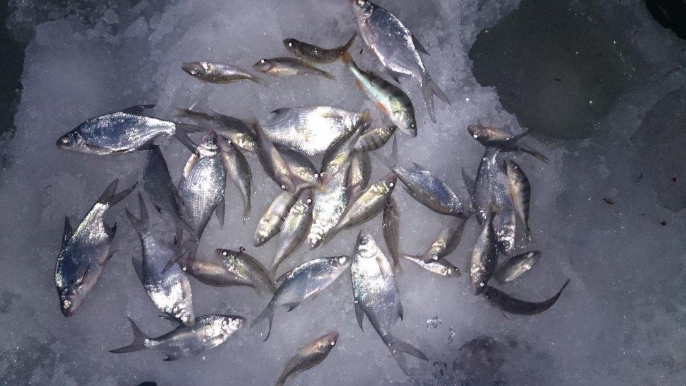 клев рыбы в николаеве