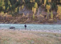 Горный Алтай рыбалка хариуса на реке Чуя.