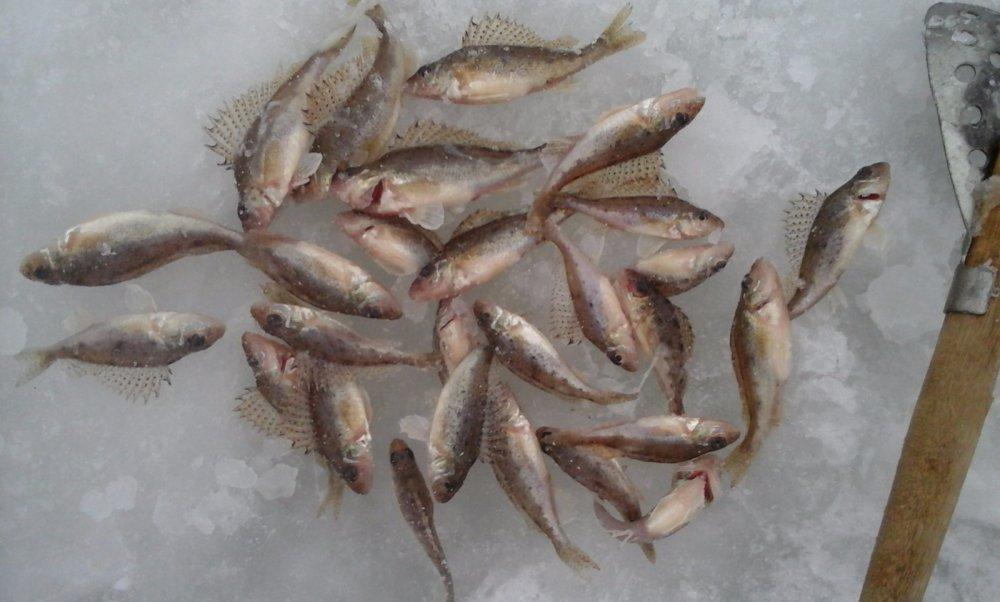 рыбалка на кузнецовском затоне