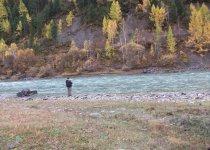 Рыбалка на реке Чуя Горный Алтай